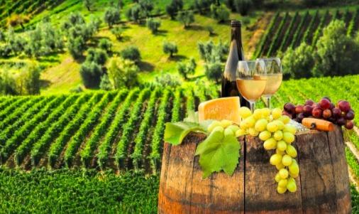 Eveniment inedit în această toamnă: crosul Marcea Winery Run, în podgoria de la Ștefănești
